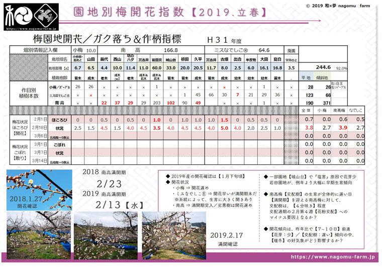 園地別梅開花指数【2019立春】 和×夢 nagomu farm