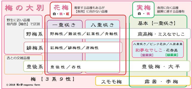 梅体系図【3系9性】 和夢なでしこ 和×夢 nagomu farm
