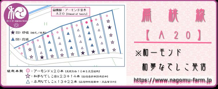 扁桃線【A20】アイコン 和×夢 nagomu farm
