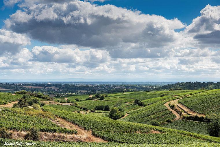 vignes de Pouilly-Fuissé, Bourgogne