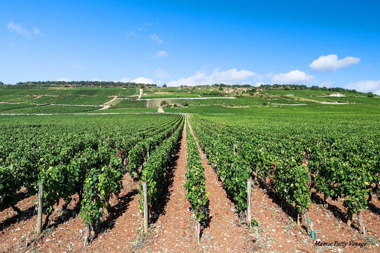 Vignes bourguignonnes, Vosne-Romanée