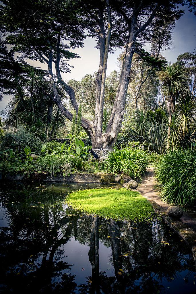 Zwei Border Collies im Jardin Botanique de Vauville n der Manche, Normandie.