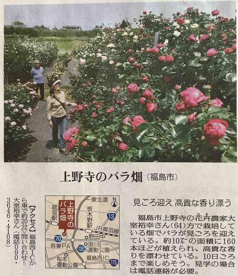 上野寺のバラ畑 福島市でおすすめのバラ園3選
