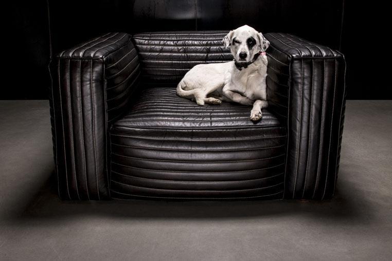 Hund in schwarzen Designersessel