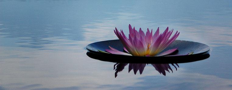 lotus-occitanie ashtanga