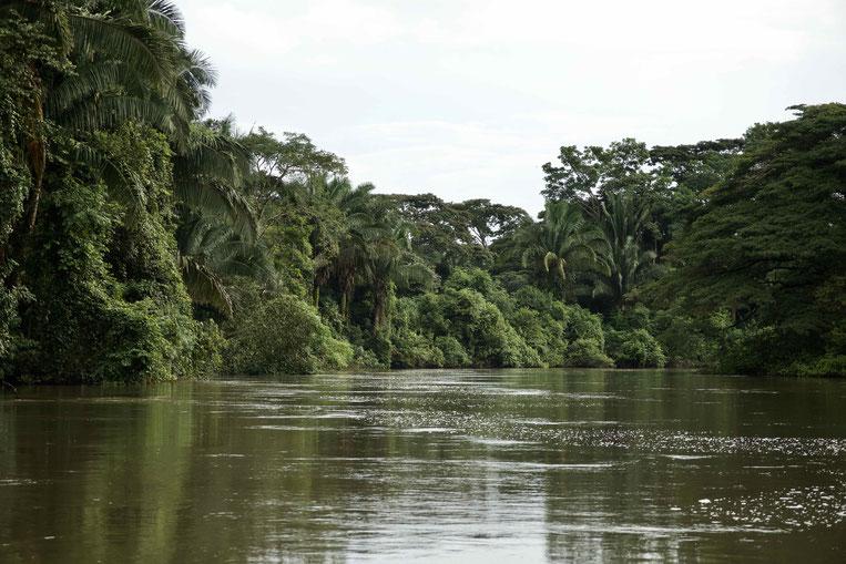 Jungle River inkl. Tarpon