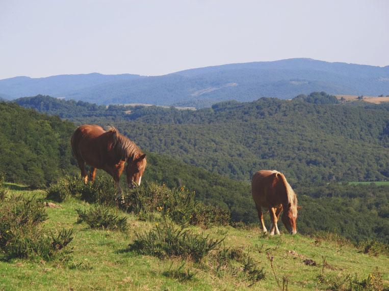 bigousteppes espagne montagne ibaneta chevaux