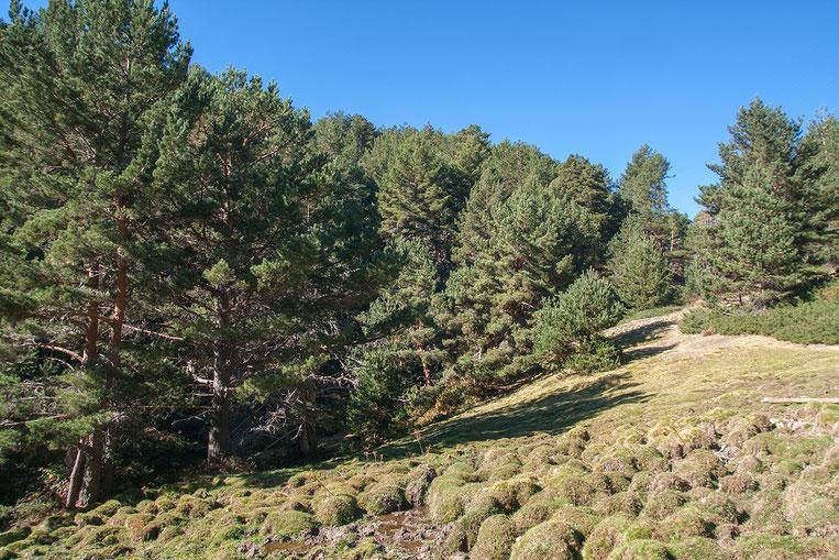 Paisaje de alta montaña de la Sierra de Guadarrama con turbera ombrógena fácilmente reconocible por el abombamiento de parte de su superficie.