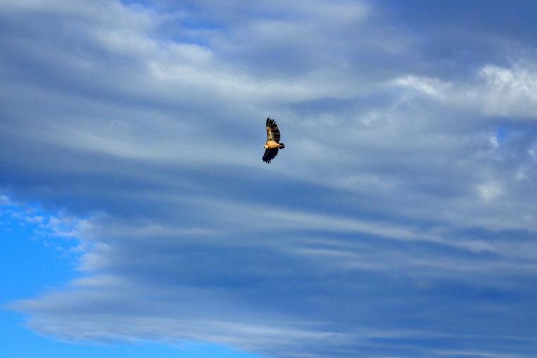Si ce n'est quelques vautours... qui attendent quoi?