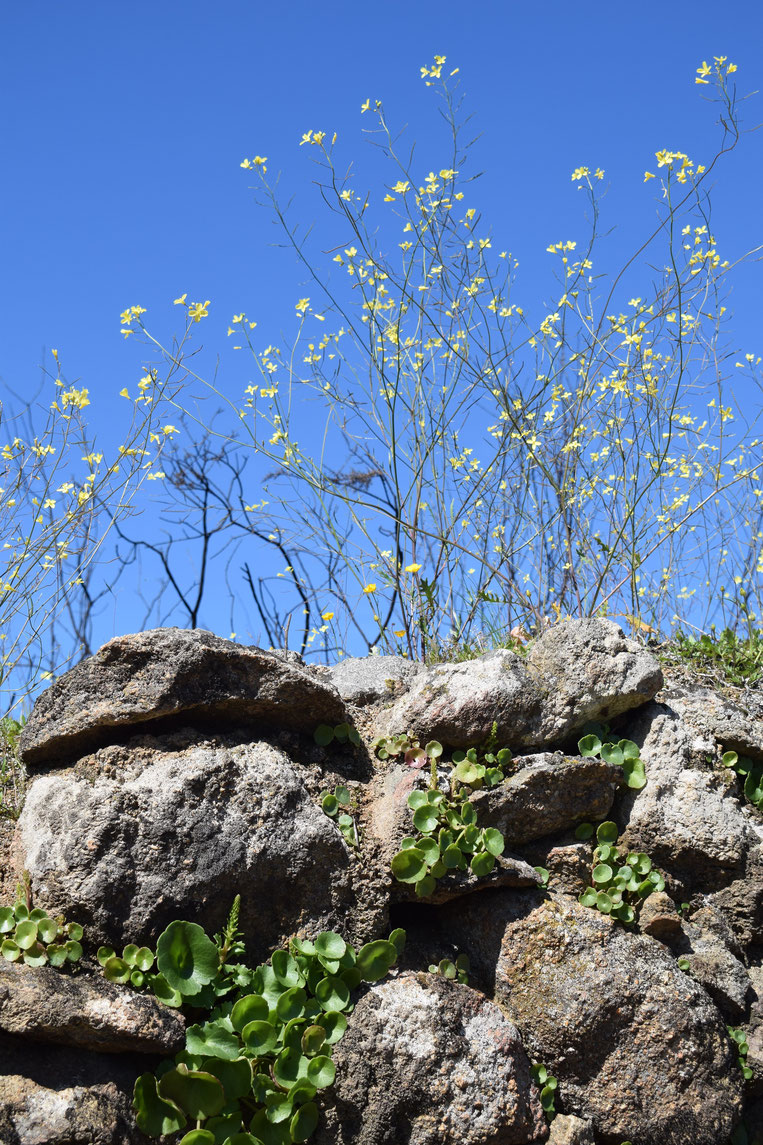wall and wildflowers, Spring in Portugal