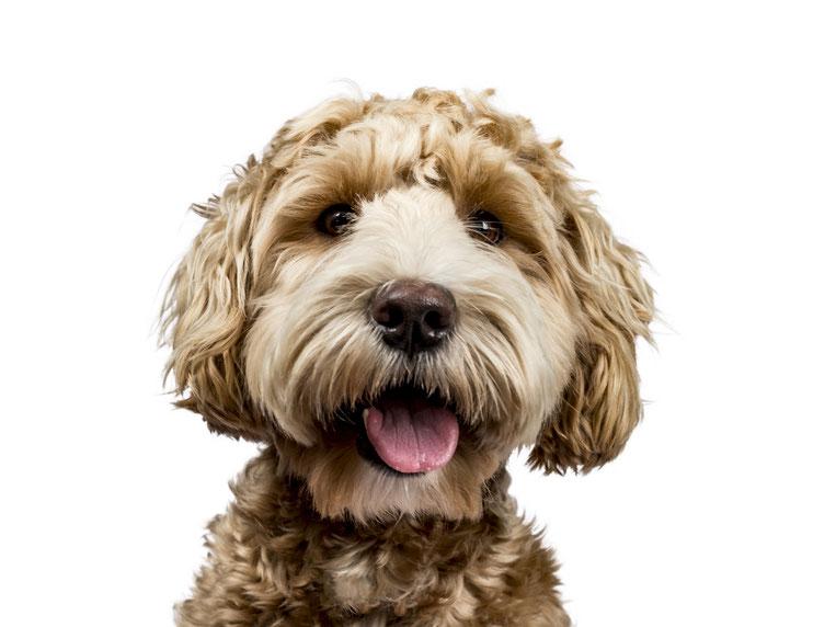 My Office Dog 2021 Probetag · Freebie-Download mit Prozess & Schedule by Stephanie Kohlsaat