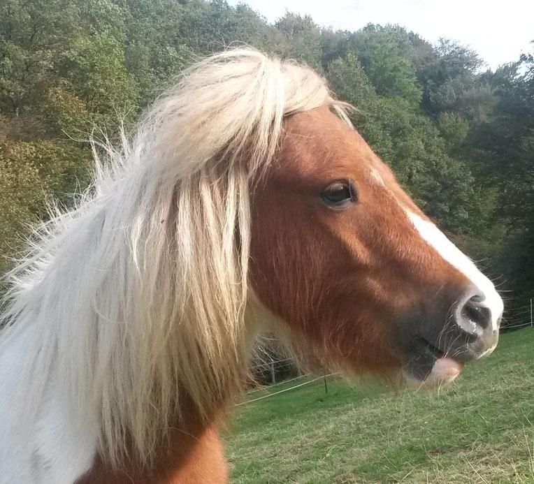 Ponyreiten - Sichere, individuelle Ponyerlebnisse auch in Corona-Zeiten
