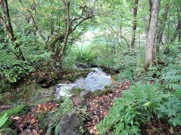 弁天沼に流れ込む川