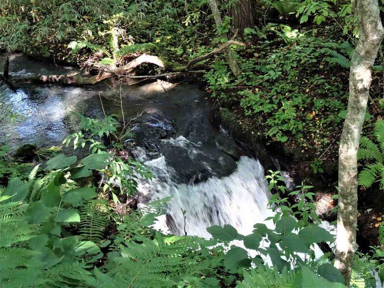 みどろ沼と弁天沼の途中にある滝