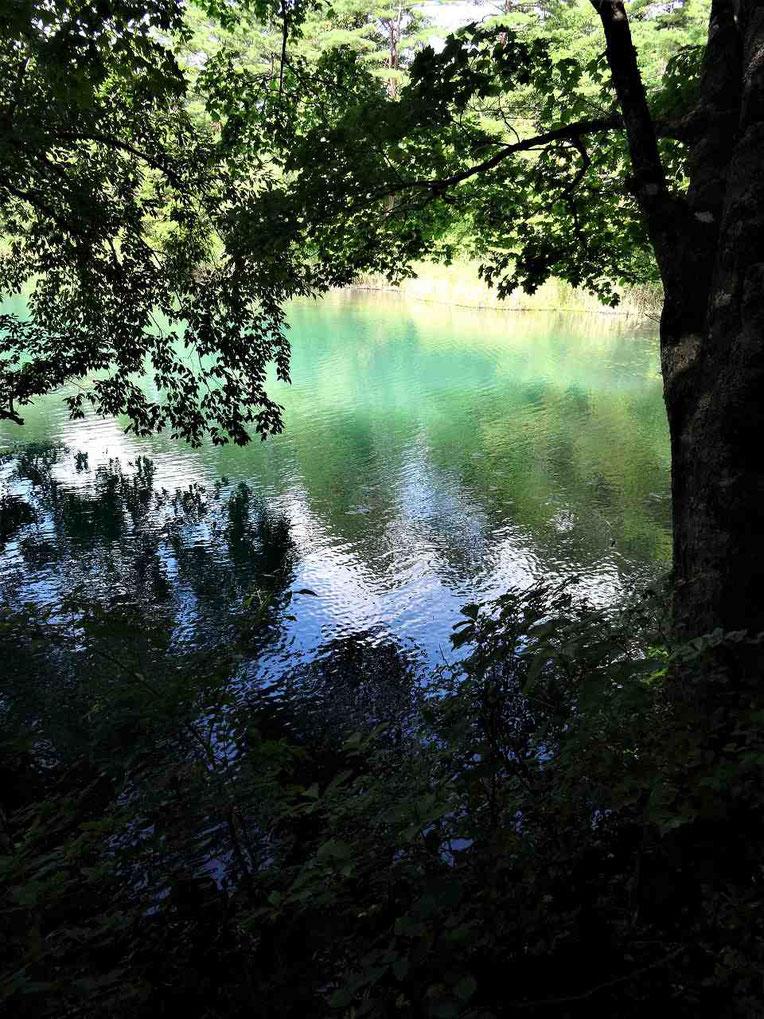 場所によって色を変える毘沙門沼