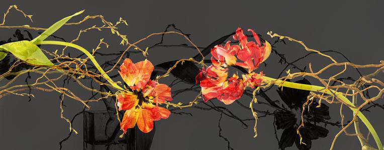 "© Bernd Pirschtat -ArtConnect - Februar 2018 - ""Flaming Parrot"" ... Tulipe francoise"