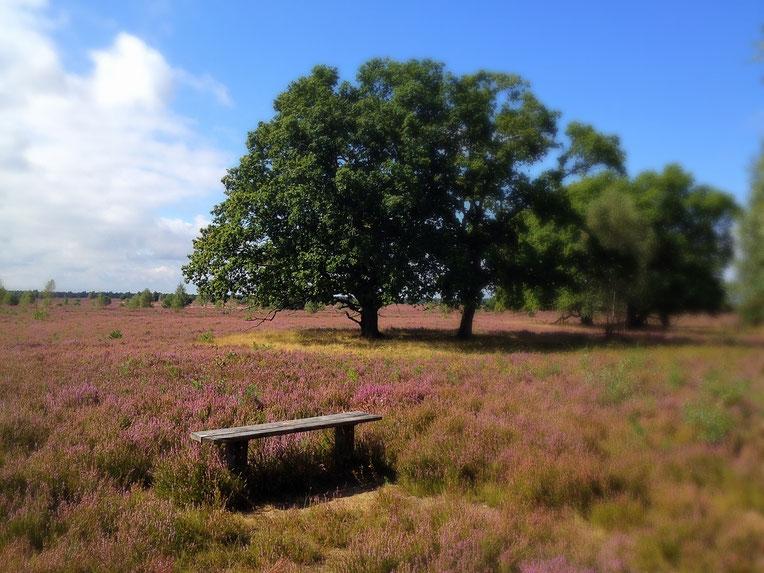 tiefer Frieden auf einer kleinen Heide-Bank