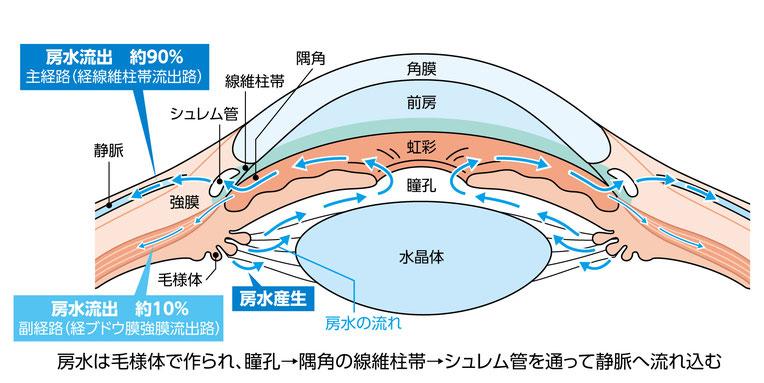 房水の流れ