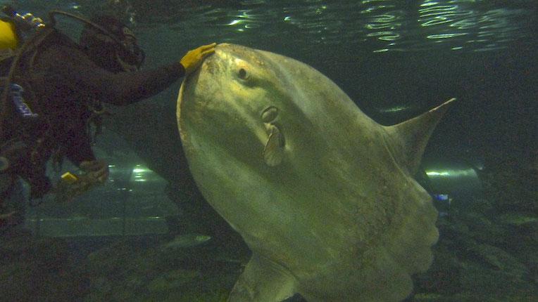 Ich beim füttern des Fisches im Aquarium.