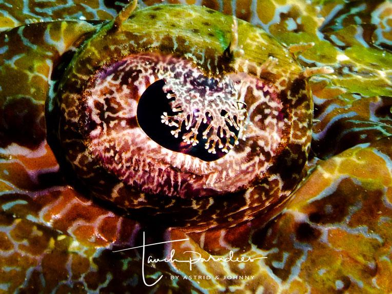 Auge des Tieres