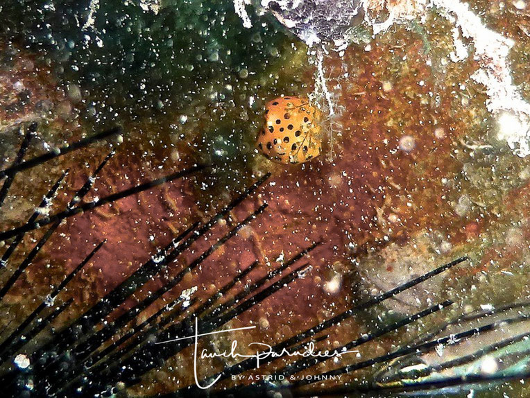 Jungfisch nicht größer als ein Daumennagel :-)