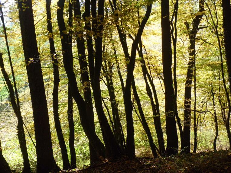 Waldtherapeutin,  Psychotherapie im Wald, Naturtherapie, Waldmedizin