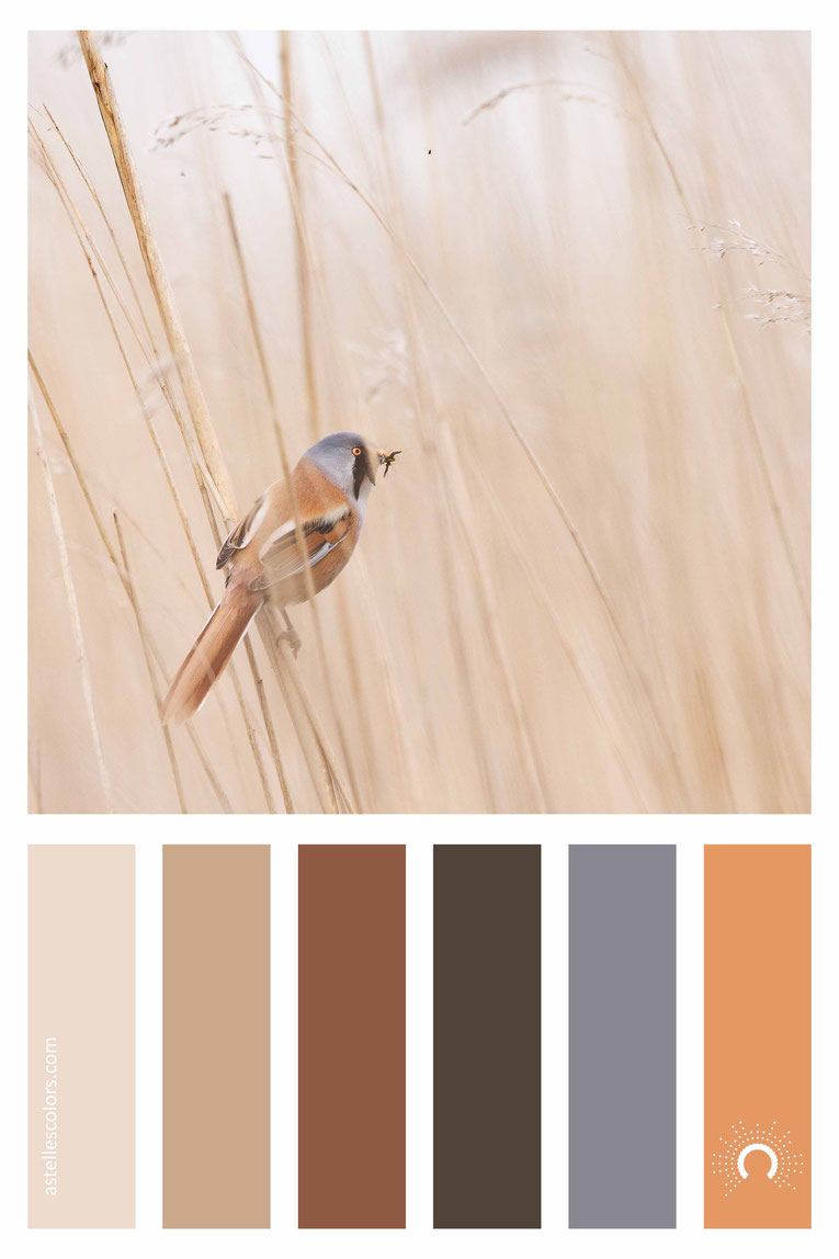 color palette, color combination, color combo, Farbpalette, warm-cool color harmony: orange, brown, blue, grey, sand, red-orange, blue-violet, beige