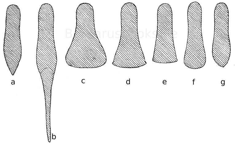 Eisenschuhformen. a. 1290—1390. b. 1300—1490.ca. 1500— 1530. d. 1530—1540. e. 1540—1550. f. 1550—1560. g. 1560—1590.
