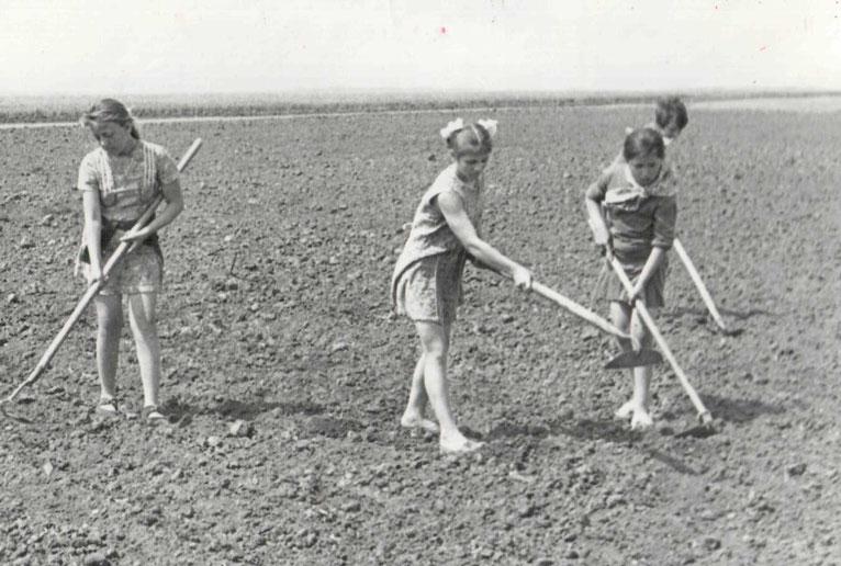 Школьная полеводческая бригада