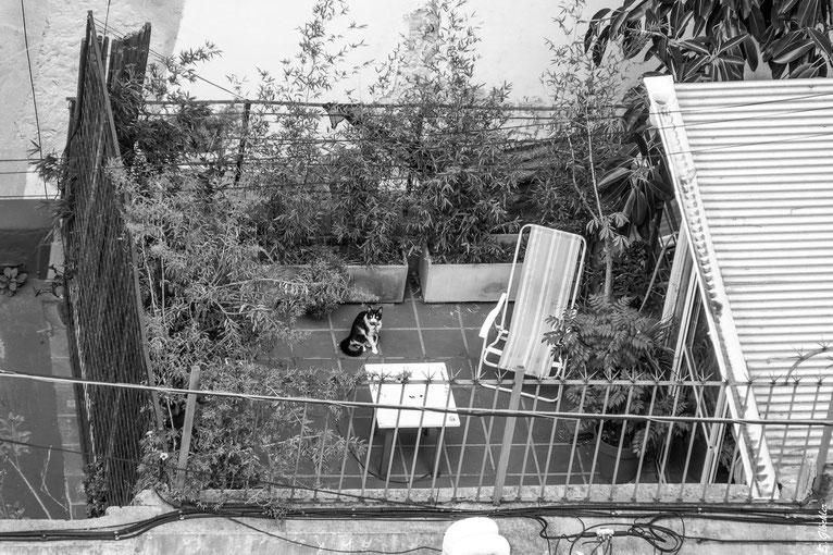 #stayhome: Wir beobachten und werden beobachtet