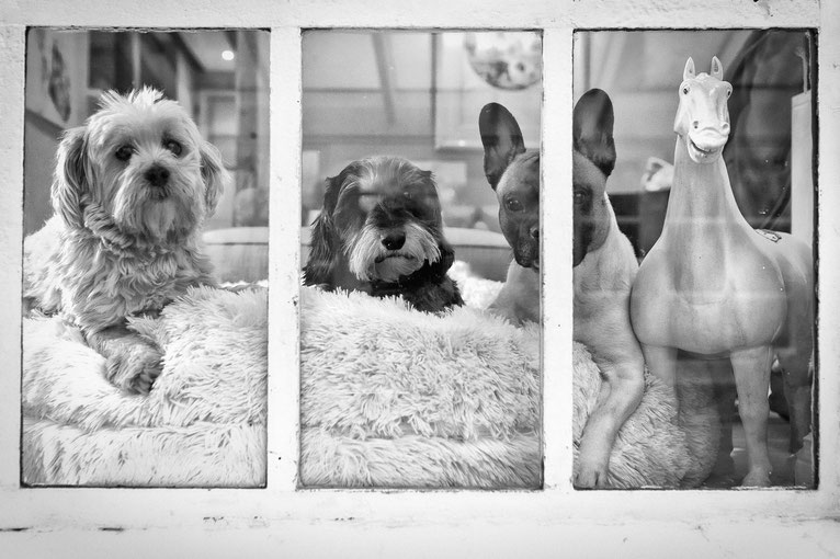 Hundekumpels sind in dem Jungspund manchmal einfach wichtiger als Herrchen oder Frauchen.