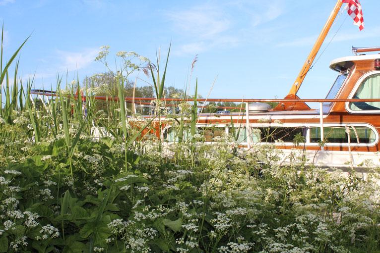 Vaartochten in het Natuurpark de Biesbosch op een klassiek stalen schip met een houten opbouw
