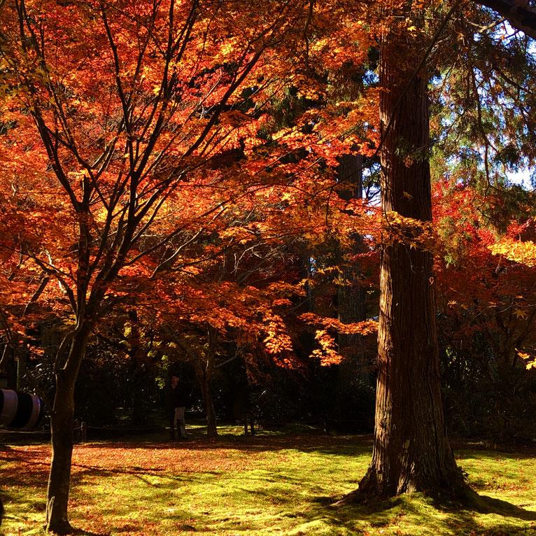 京都市下京区の心療内科、女医のいるメンタルクリニック、三千院の紅葉