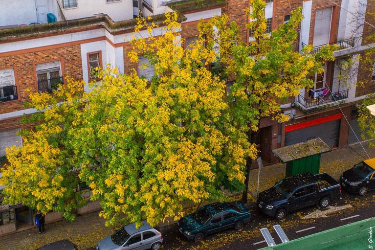 Corona in Argentinien: Vom Küchenfenster aus können wir den Herbst beobachten.
