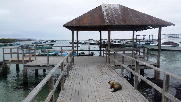 Schlafende Seelöwen hier und da