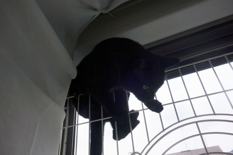 猫の脱走防止
