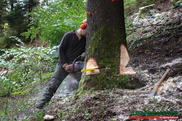 Baum fällen Forstunternehmen Armbruster Wald Tanne Steilhang
