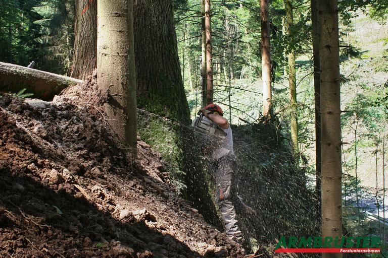 Baum fällen Forstunternehmen Armbruster