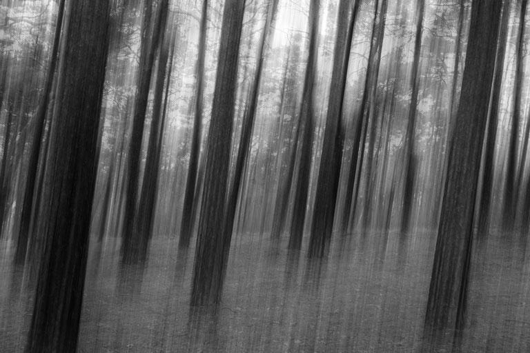 A forest is a forest is a forest :: Copyright Martin Schmidt, Fotograf für Schwarz-Weiß Fine-Art Architektur- und Landschaftsfotografie aus Nürnberg