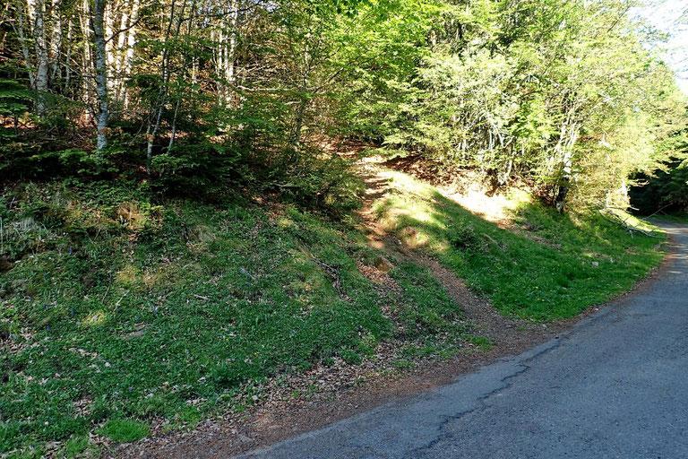 Le sentier de départ monte directement dans le bois.