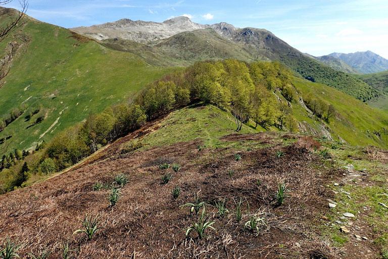 Un petit sentier longe la crête qui va m'amener au Col d'Argnourès.