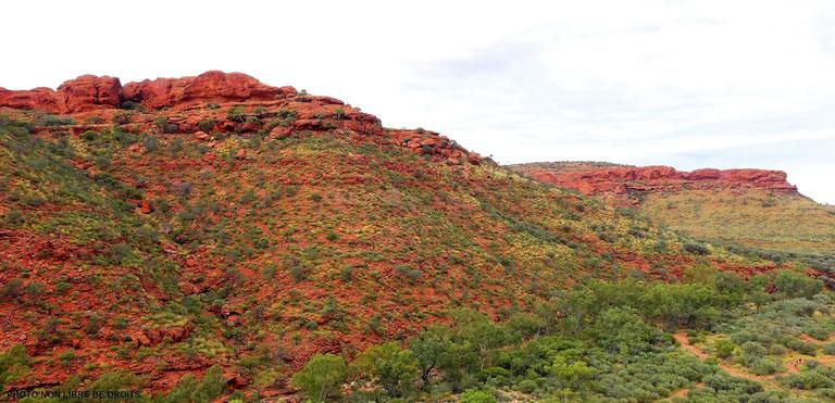 De rouge et de vert, Watarrka National Park, Australie