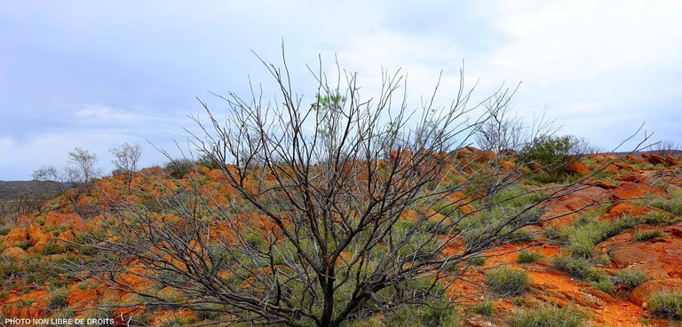 Olive Pink Botanic Garden, Alice Springs