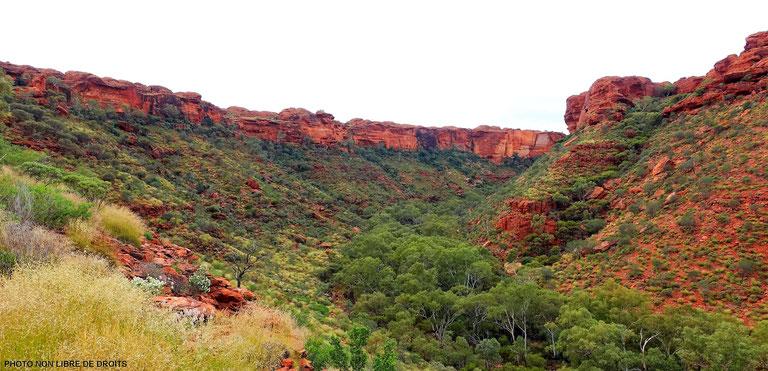 La vie en vert  auKings Canyon National Park, Australie