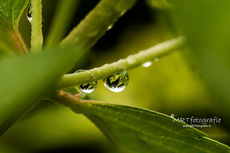 Macro van regendruppels