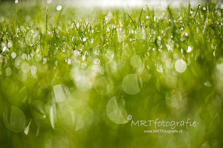 Macrofotografie dauwdruppels in het gras