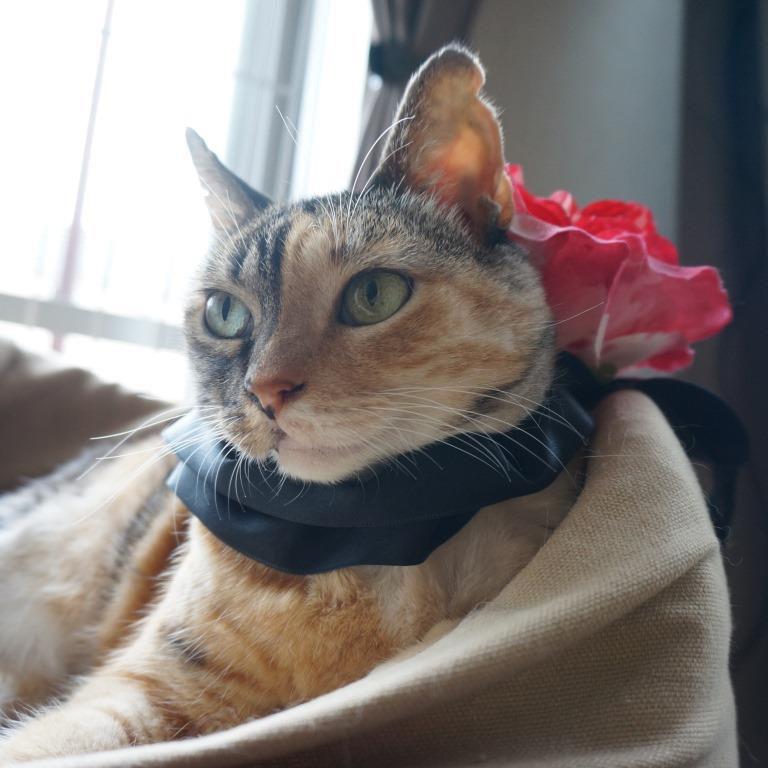 猫グッズ;猫と人,nekotohito,ネコトヒト