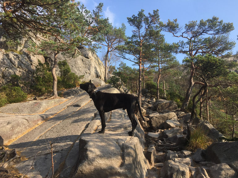Preikestolen_Wanderung_Norwegen_Reisebericht_Roadtrip_Die Roadies