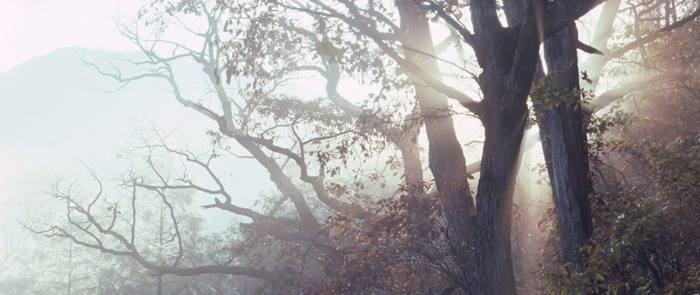 bosque con luz del sol que penetra los arboles