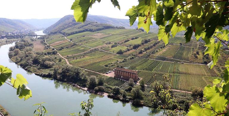 Weinregionen Deutschland Moselschleife mit Weinreben umrahmt